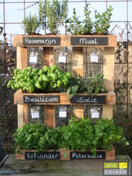 Kruiden in tuin