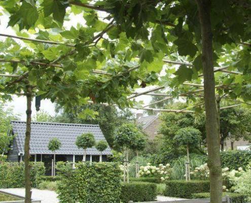 Dakbomen met strakke hagen
